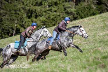 11.4.2021 Radek Holčák: postoje koní