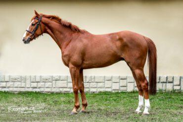 10.4.2021 Karolinka: Paint horse